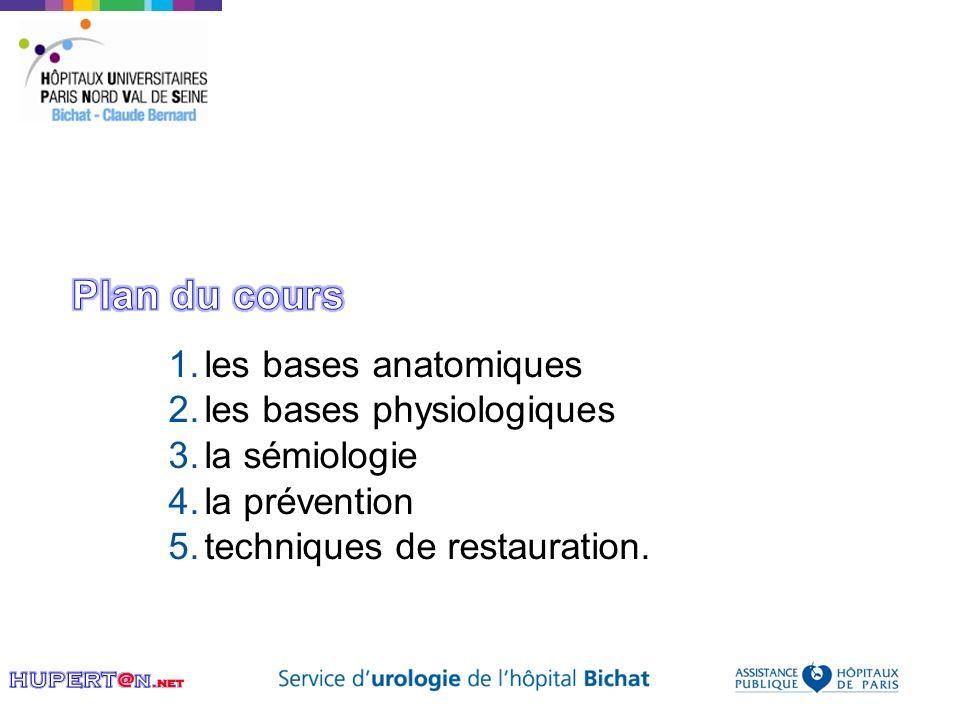 Plan du cours les bases anatomiques les bases physiologiques