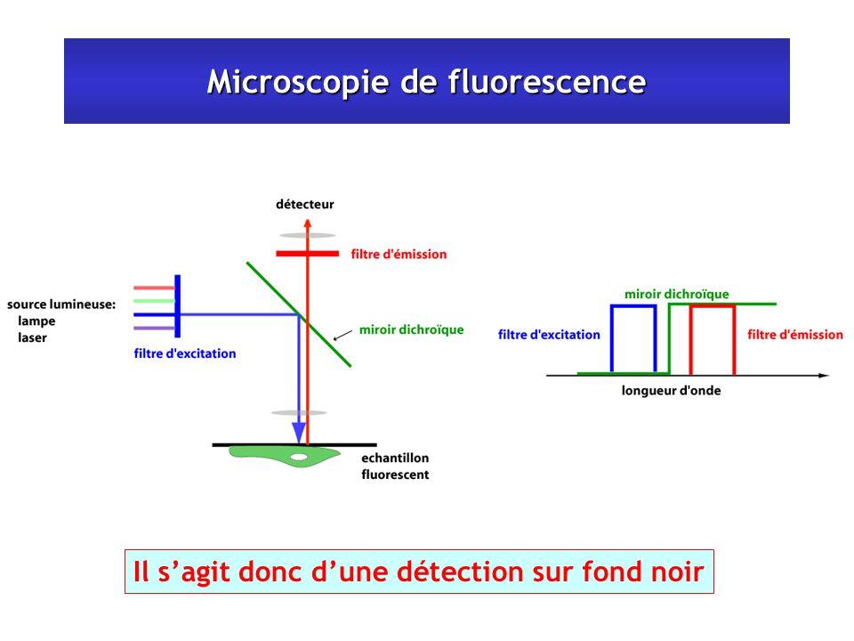Microscopie de fluorescence