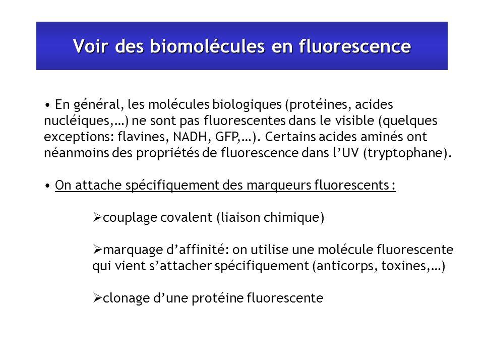 Voir des biomolécules en fluorescence