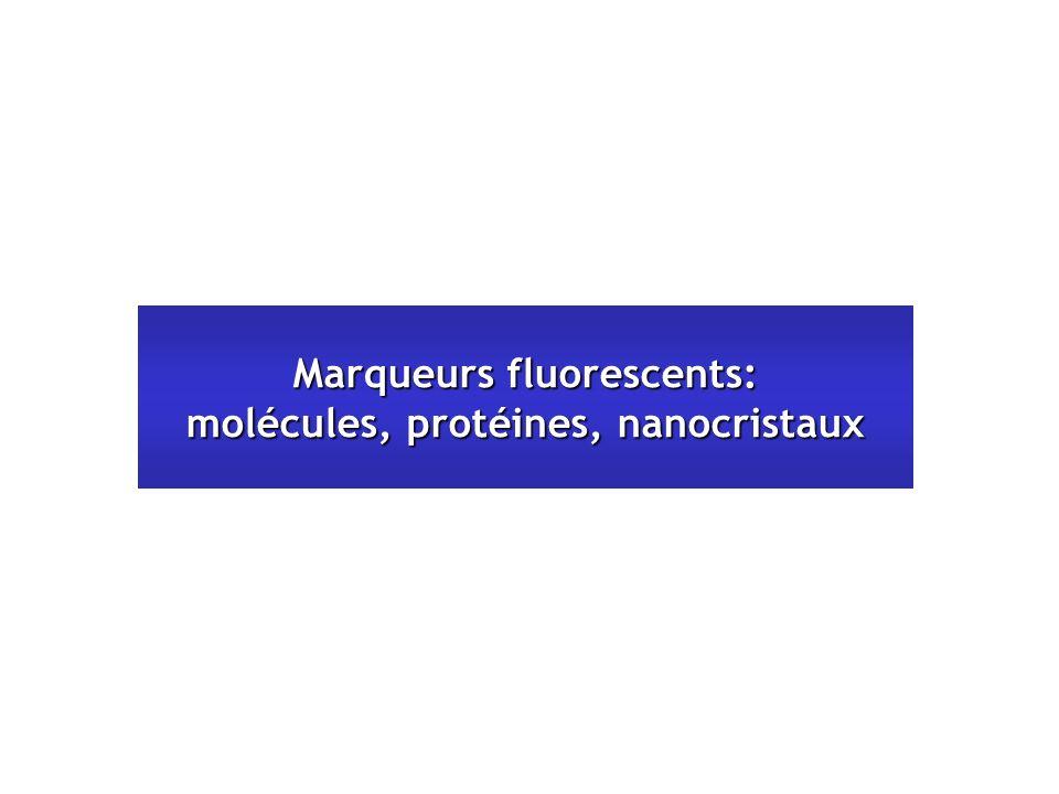 Marqueurs fluorescents: molécules, protéines, nanocristaux