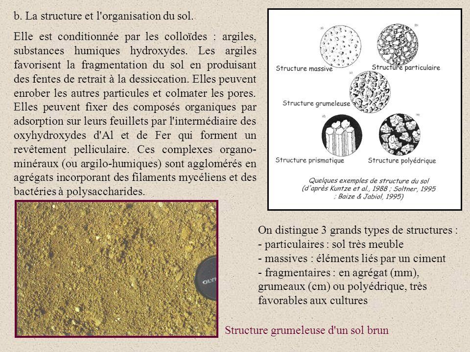 b. La structure et l organisation du sol.