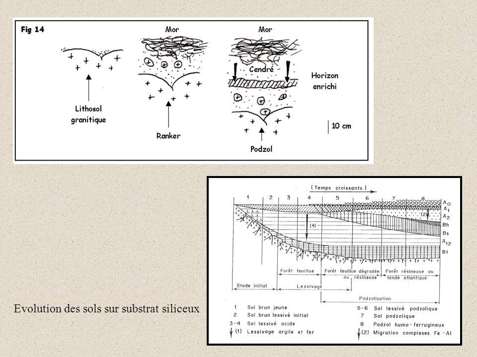 Evolution des sols sur substrat siliceux
