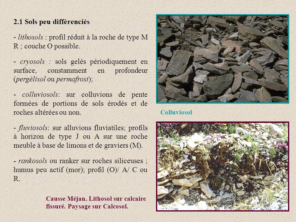 2.1 Sols peu différenciés - lithosols : profil réduit à la roche de type M R ; couche O possible.