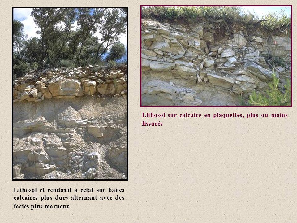 Lithosol sur calcaire en plaquettes, plus ou moins fissurés