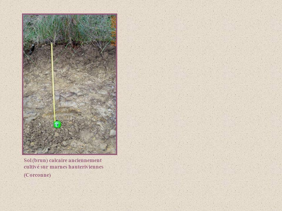 Sol (brun) calcaire anciennement cultivé sur marnes hauteriviennes (Corconne)