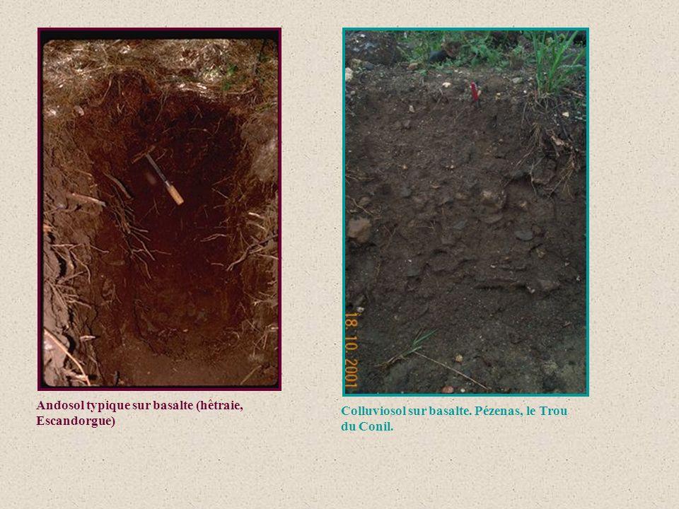 Andosol typique sur basalte (hêtraie, Escandorgue)