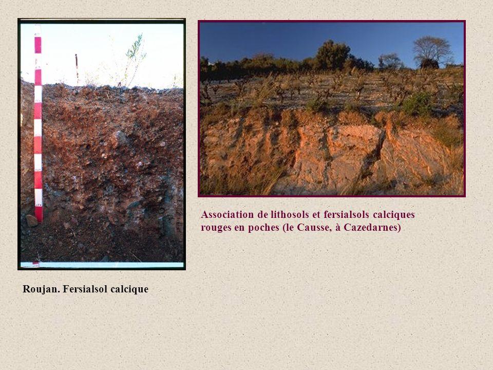 Association de lithosols et fersialsols calciques rouges en poches (le Causse, à Cazedarnes)