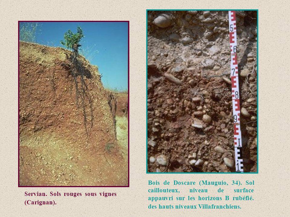 Bois de Doscare (Mauguio, 34)
