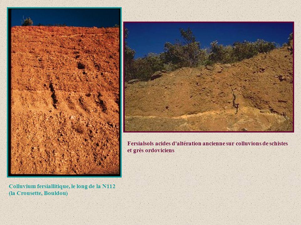 Fersialsols acides d altération ancienne sur colluvions de schistes et grès ordoviciens