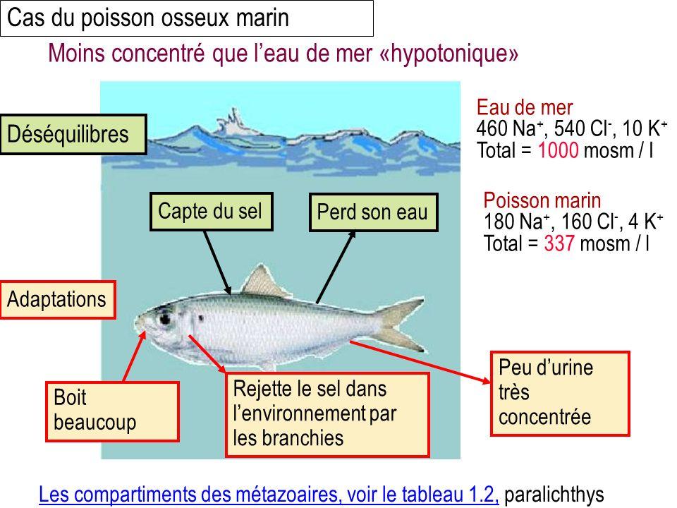 Cas du poisson osseux marin