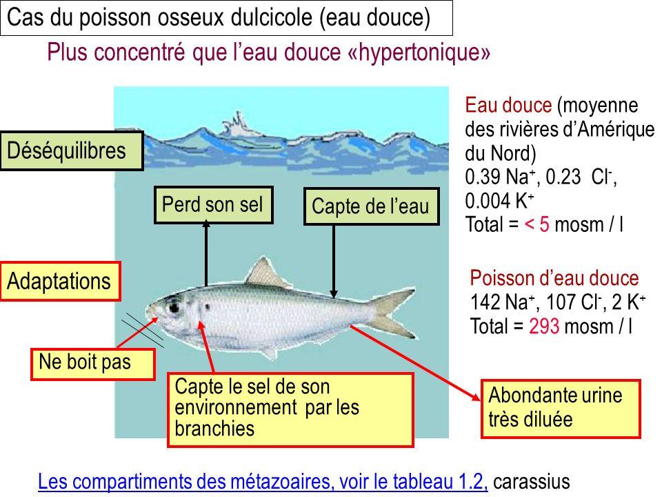 Cas du poisson osseux dulcicole (eau douce)