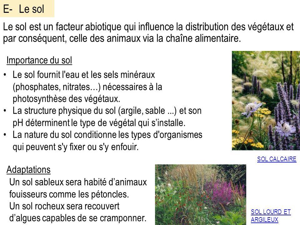 E- Le sol Le sol est un facteur abiotique qui influence la distribution des végétaux et par conséquent, celle des animaux via la chaîne alimentaire.