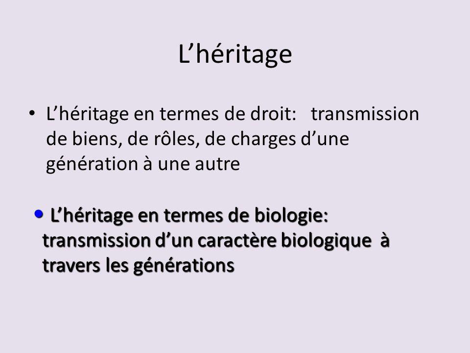 L'héritage L'héritage en termes de droit: transmission de biens, de rôles, de charges d'une génération à une autre.