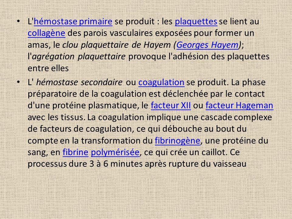 L hémostase primaire se produit : les plaquettes se lient au collagène des parois vasculaires exposées pour former un amas, le clou plaquettaire de Hayem (Georges Hayem); l agrégation plaquettaire provoque l adhésion des plaquettes entre elles