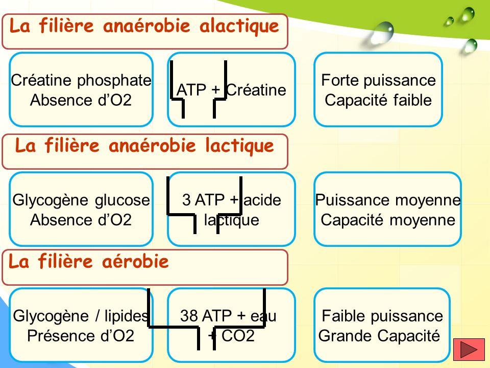 La filière anaérobie alactique