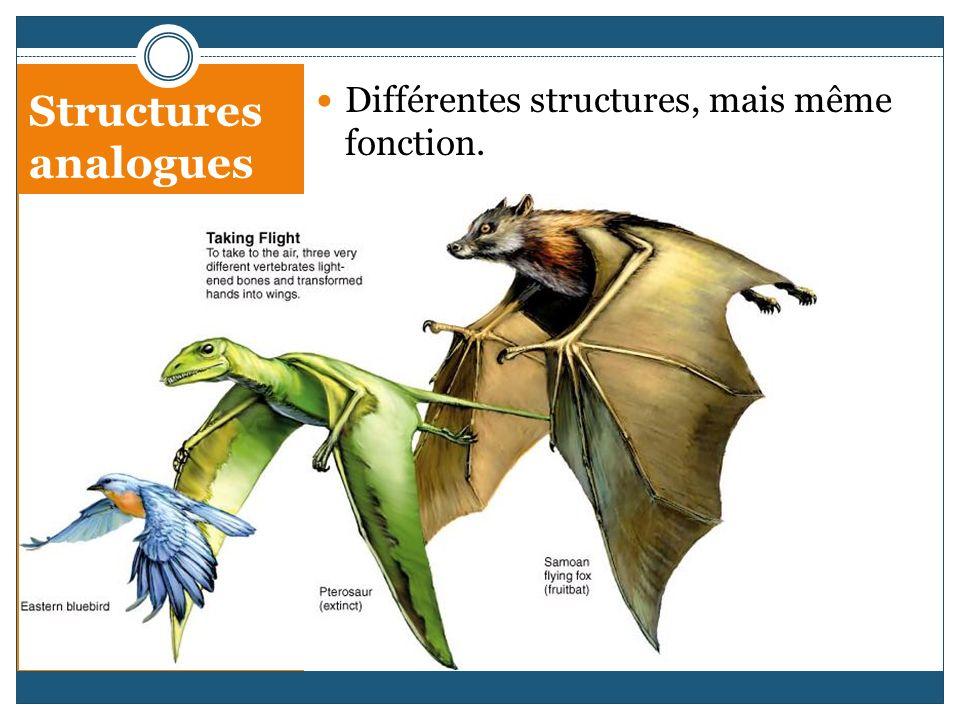 Structures analogues Différentes structures, mais même fonction.