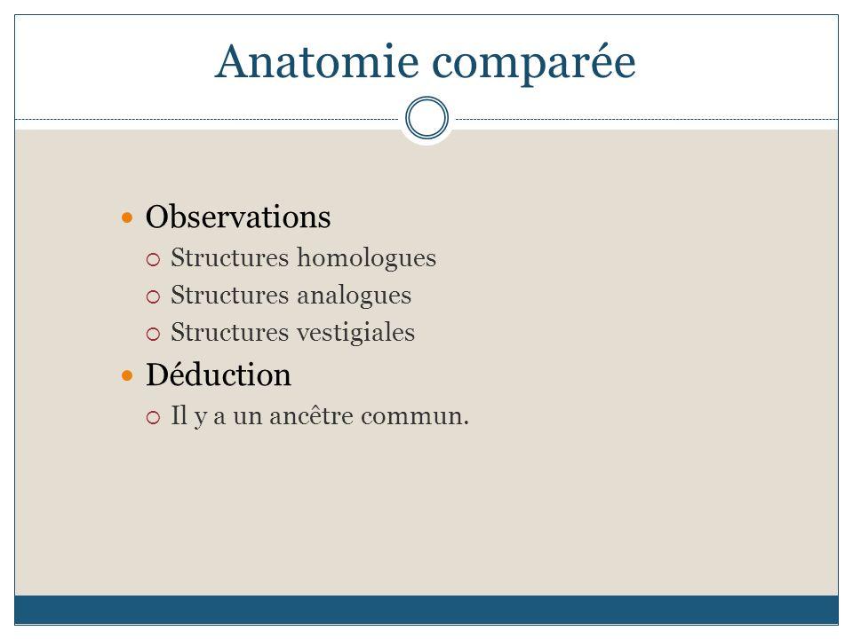 Anatomie comparée Observations Déduction Structures homologues