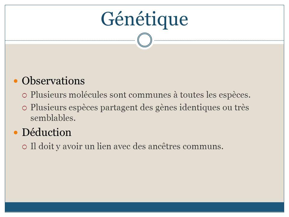 Génétique Observations Déduction