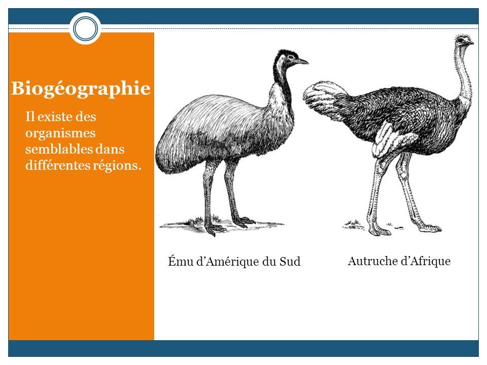Biogéographie Il existe des organismes semblables dans différentes régions.