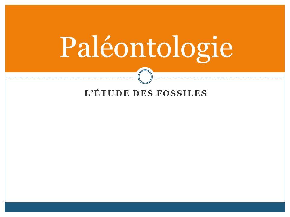 Paléontologie L'étude des fossiles