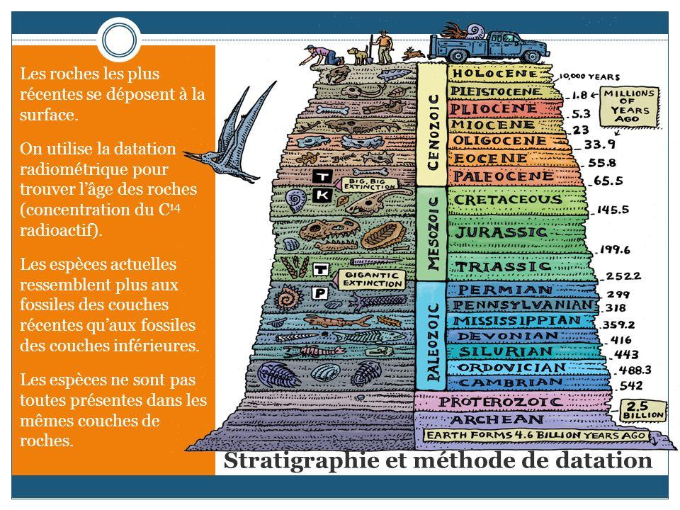 Stratigraphie et méthode de datation