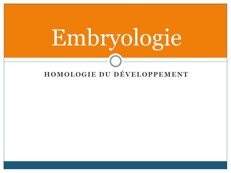 Homologie du développement