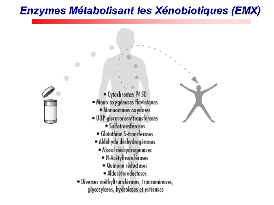 Enzymes Métabolisant les Xénobiotiques (EMX)