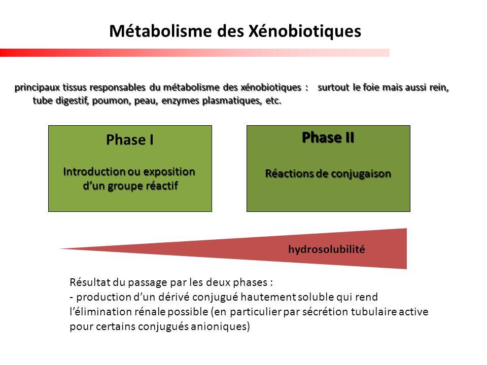 Métabolisme des Xénobiotiques
