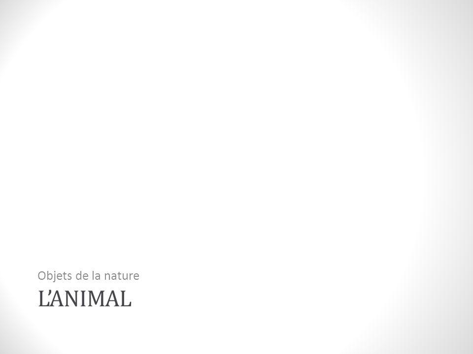 Objets de la nature L'animal
