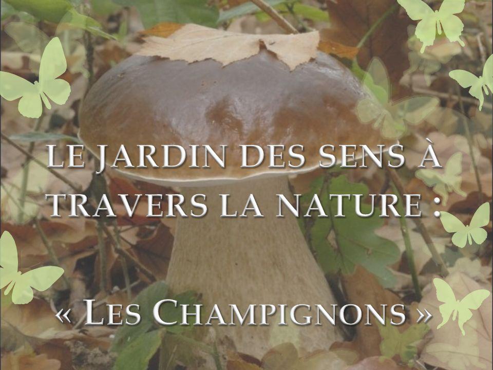 le jardin des sens à travers la nature : « Les Champignons »