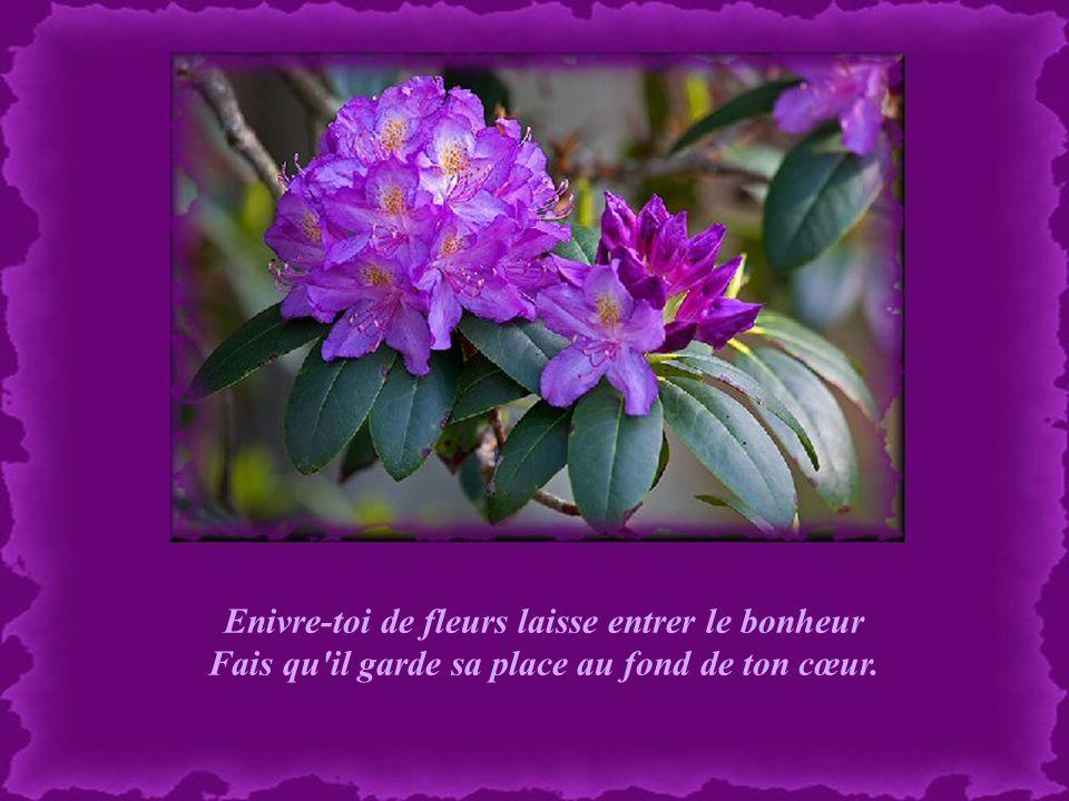 Enivre-toi de fleurs laisse entrer le bonheur