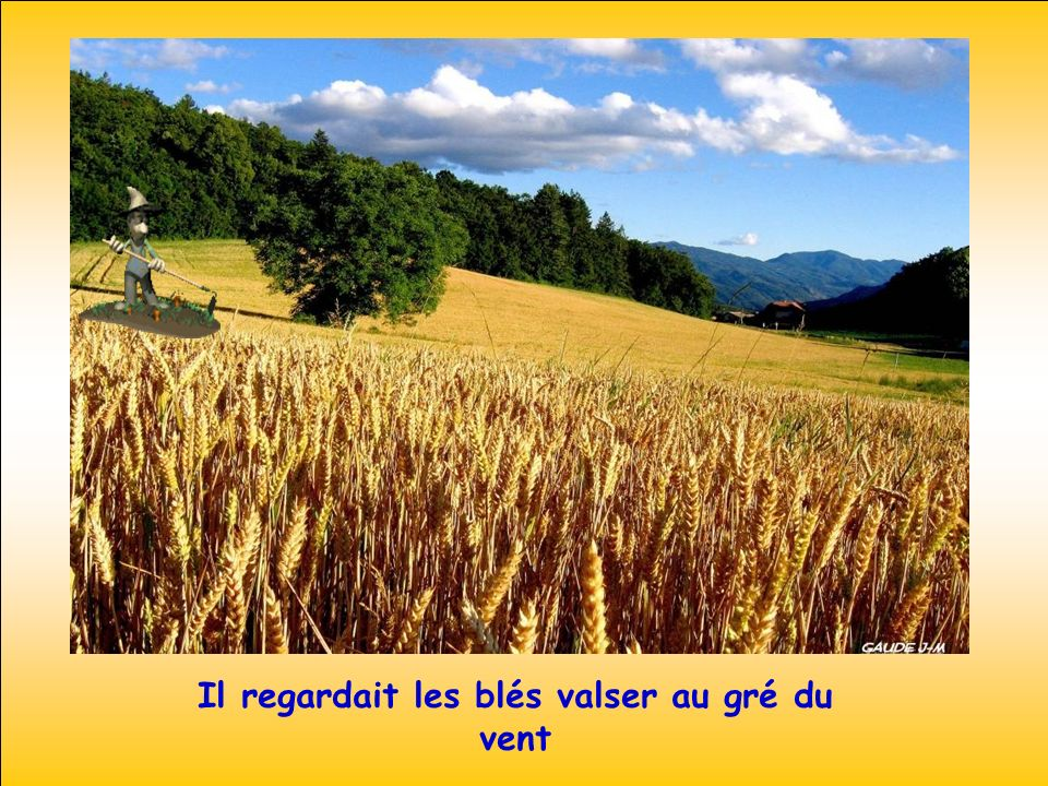 Il regardait les blés valser au gré du vent