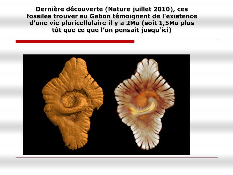 Dernière découverte (Nature juillet 2010), ces fossiles trouver au Gabon témoignent de l'existence d'une vie pluricellulaire il y a 2Ma (soit 1,5Ma plus tôt que ce que l'on pensait jusqu'ici)