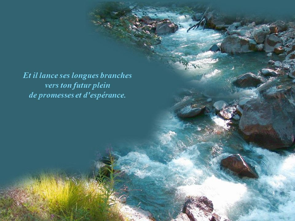 Et il lance ses longues branches de promesses et d espérance.