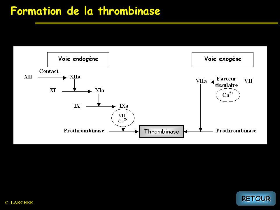 Formation de la thrombinase