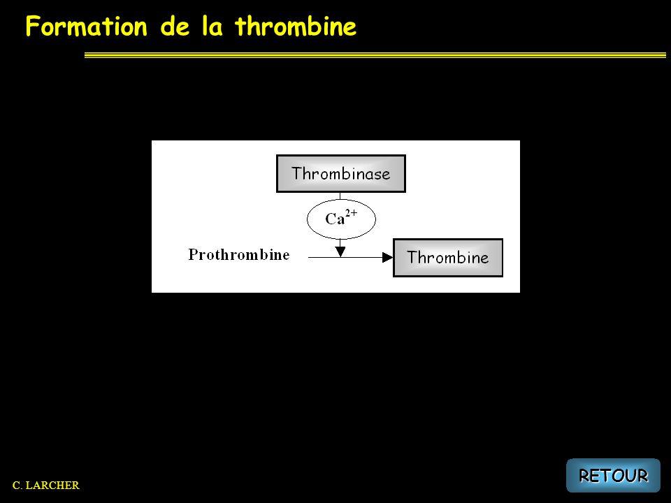 Formation de la thrombine