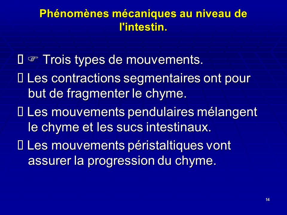 Phénomènes mécaniques au niveau de l intestin.