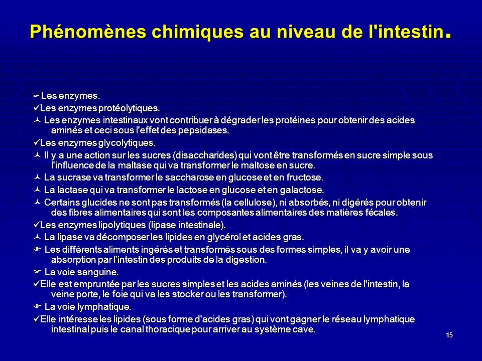 Phénomènes chimiques au niveau de l intestin.