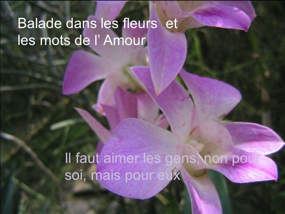 Balade dans les fleurs et les mots de l' Amour