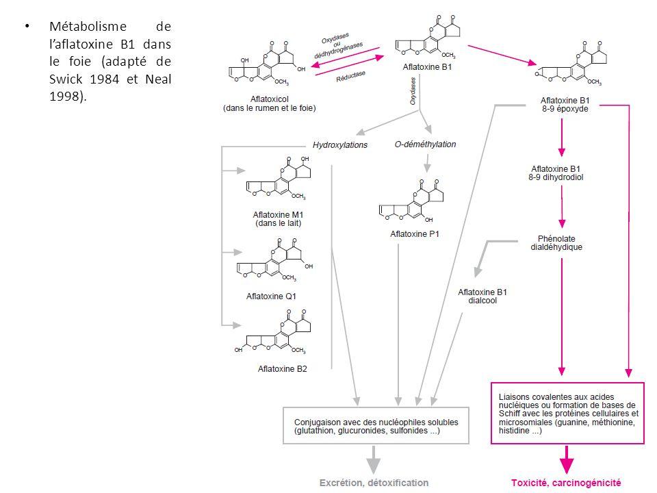 Métabolisme de l'aflatoxine B1 dans le foie (adapté de Swick 1984 et Neal 1998).