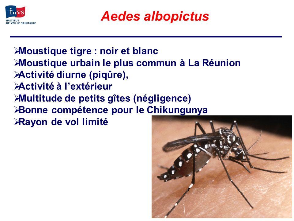 Aedes albopictus Moustique tigre : noir et blanc