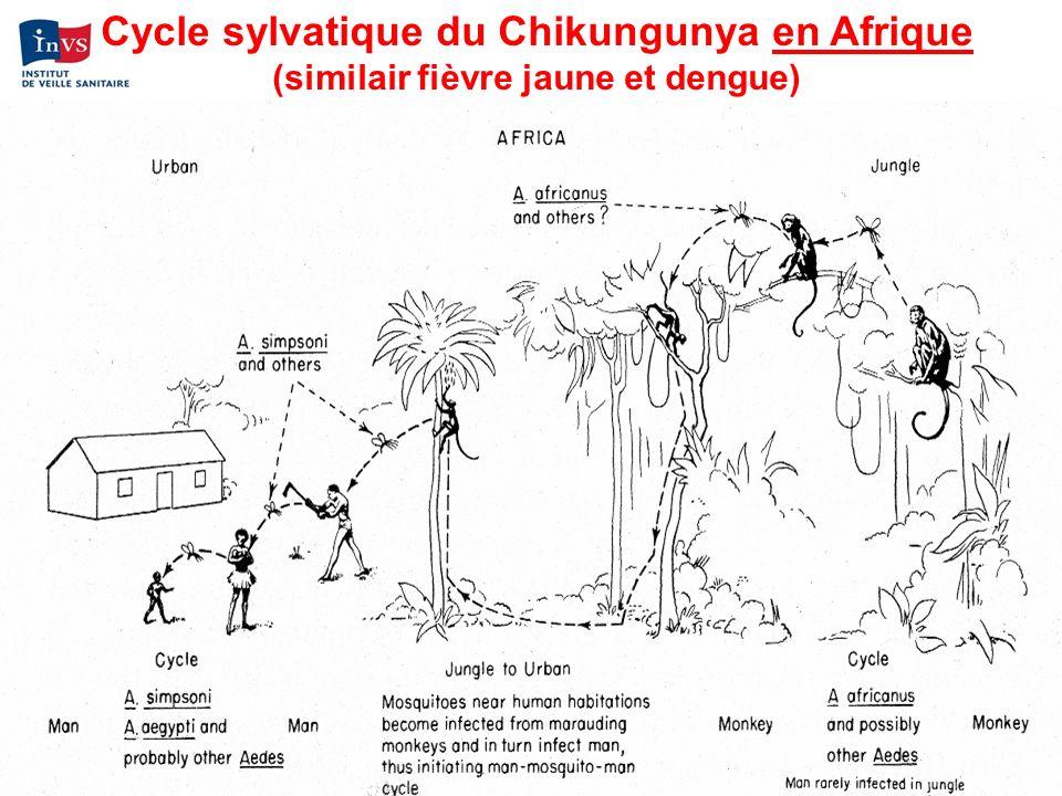 Cycle sylvatique du Chikungunya en Afrique