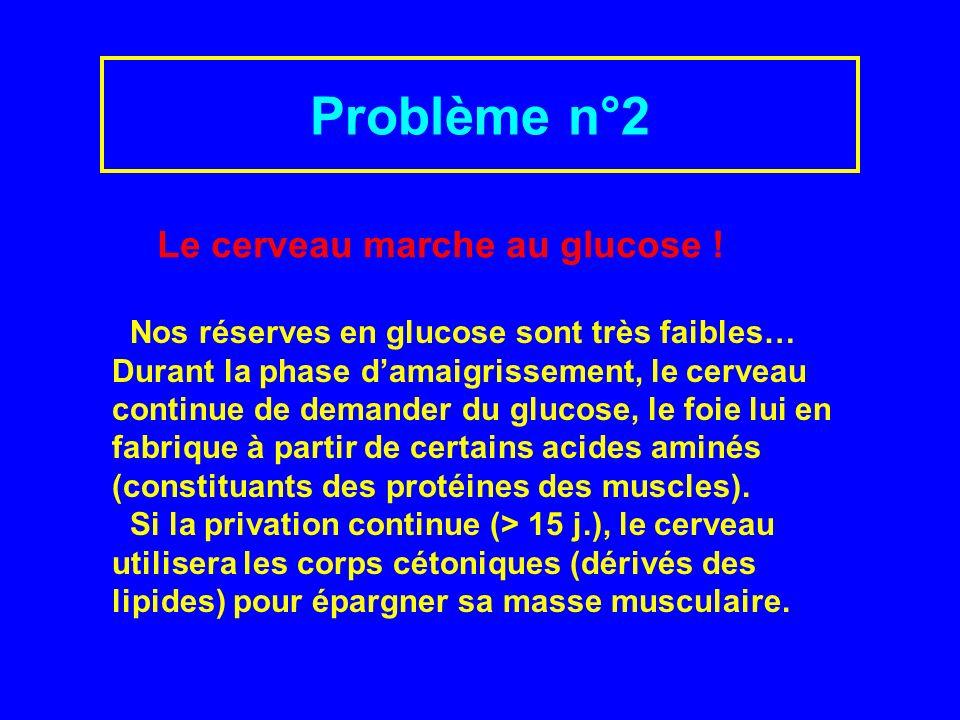 Problème n°2 Le cerveau marche au glucose !