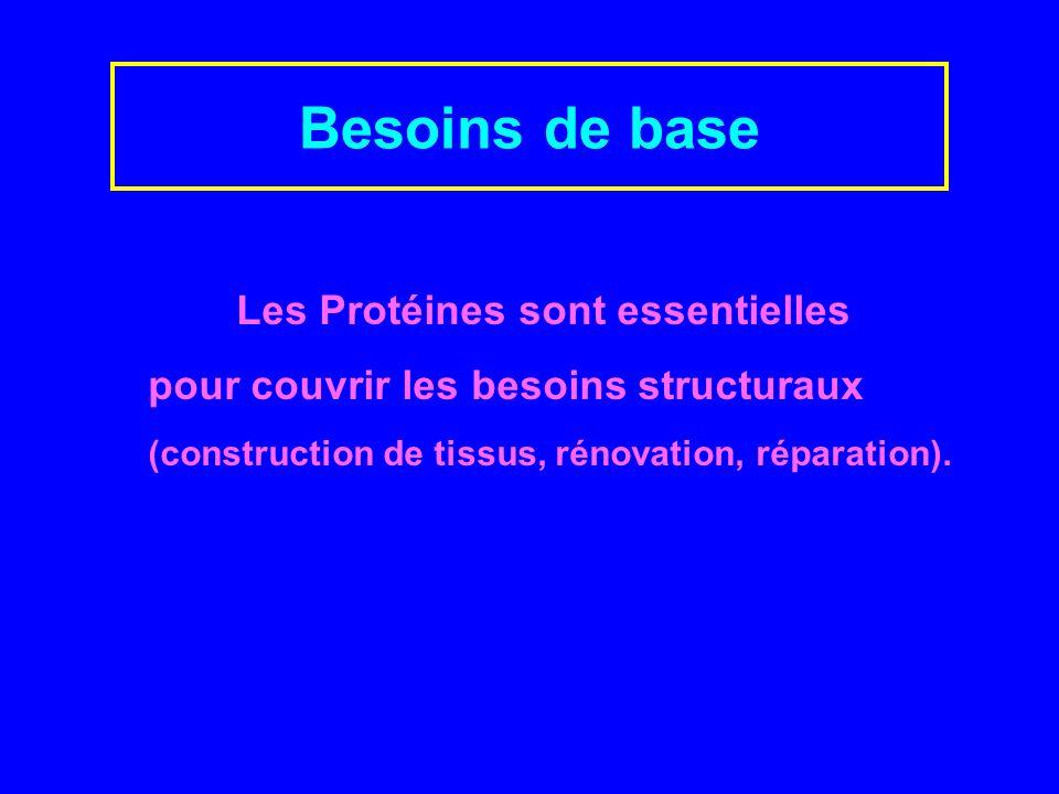 Besoins de base Les Protéines sont essentielles pour couvrir les besoins structuraux (construction de tissus, rénovation, réparation).