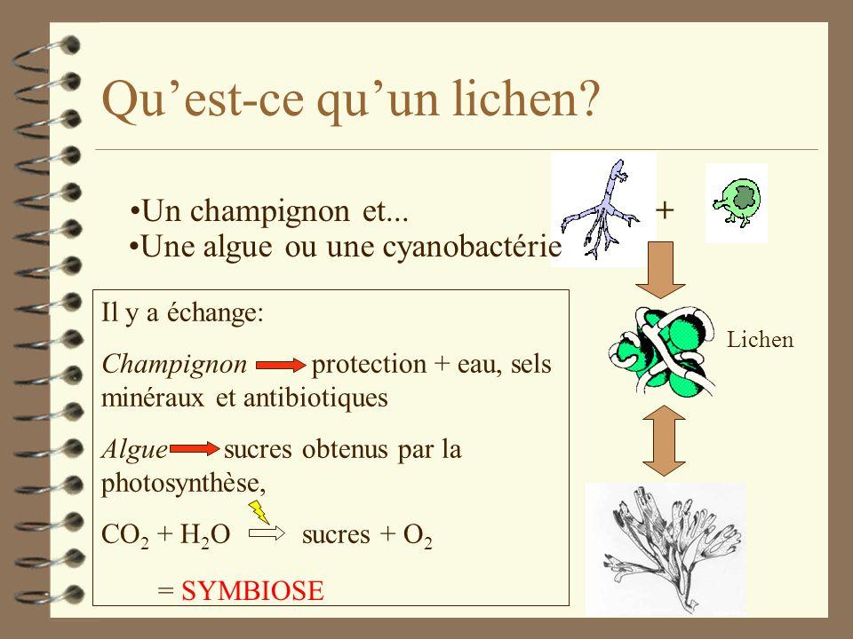 Qu'est-ce qu'un lichen