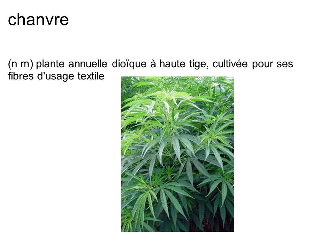 chanvre (n m) plante annuelle dioïque à haute tige, cultivée pour ses fibres d usage textile