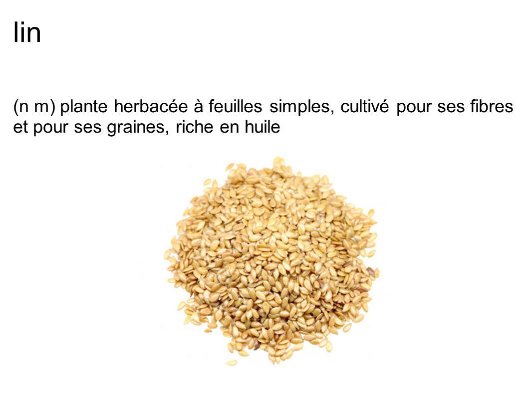lin (n m) plante herbacée à feuilles simples, cultivé pour ses fibres et pour ses graines, riche en huile.