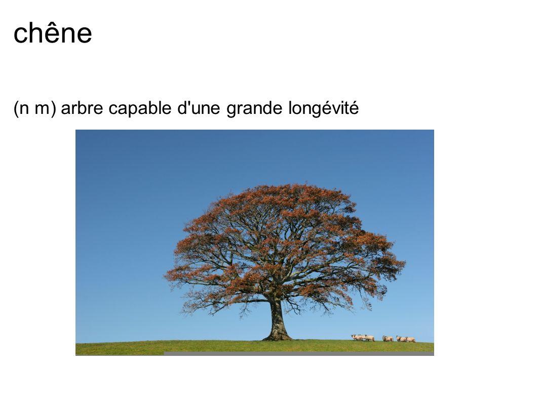 chêne (n m) arbre capable d une grande longévité