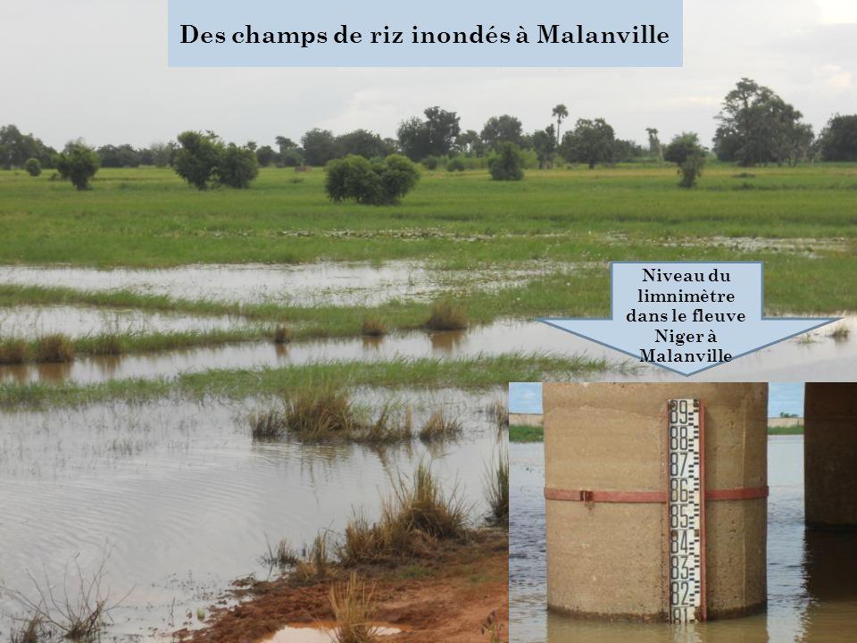 Des champs de riz inondés à Malanville