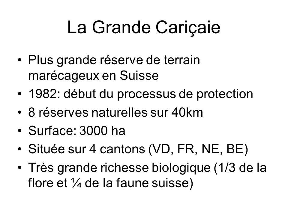 La Grande Cariçaie Plus grande réserve de terrain marécageux en Suisse